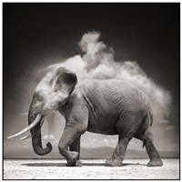 elephant with exploding dust, amboseli by nick brandt