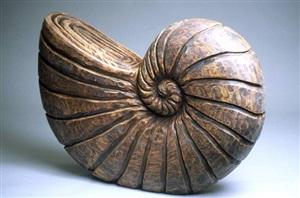spiral shell by chris berti