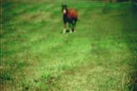 blurry pony by annette lemieux