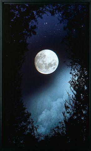 full moon briars by susan derges