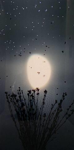 half moon - blossom by susan derges
