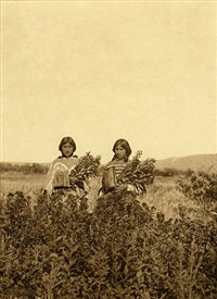 golden rod meadows, piegan by edward sheriff curtis