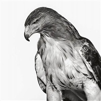 one-eyed hawk (blind side), new jersey by neil selkirk