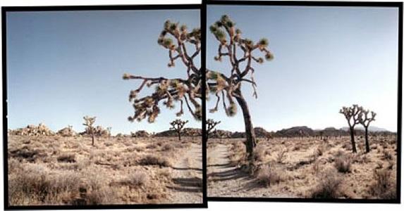 hidden valley, joshua tree national park by michael rauner