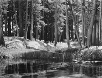 forest and stream, lyle fork of the merced river, yosemite national park, california, c. 1921 by ansel adams