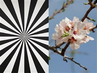 exstacy almond blossom 8 (l) by mustafa hulusi