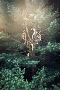 tree #3 by ryan mcginley