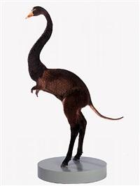 misfit (swan/ nutria/ donkey) by thomas grünfeld