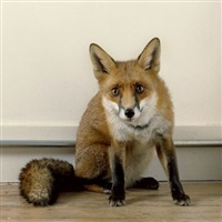 21st century fox by sam taylor-wood
