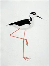 black-necked stilt by scott kelley