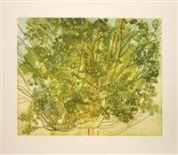 summer maple by sylvia plimack mangold