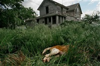 howe, nebraska, (dog in grass), june, 2005 by eugene richards