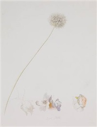 dandelion and roses by joseph stella