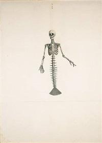 skeleton beauty by ji dachun