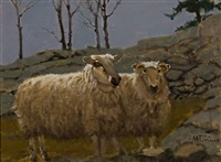 sheep on the rocks by anthony michael autorino