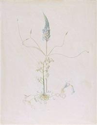 lupine by joseph stella