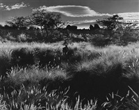 hawaii, 1980 by brett weston