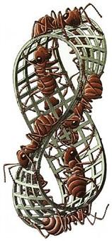 mobius strip ll (ants) by m. c. escher