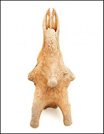 giraffe by david bailey