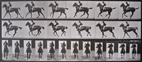 animal locomotion, plate 621, annie g., cantering, saddled by eadweard muybridge