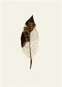 holly (winter) by garry fabian miller