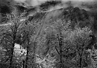 trees and cliff at eagle peak, winter, yosemite national park, california by ansel adams