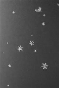 homage to wilson a. bentley #2 by yuji obata