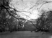 untitled (budding tree branches) by josef sudek