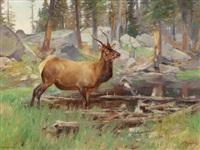 elk by carl clemens moritz rungius