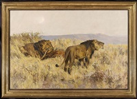 lion & lioness in the savannah by arthur wardle
