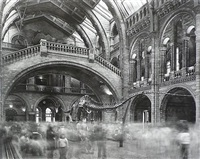 wyoming diplodocus natural history museum, london by matthew pillsbury