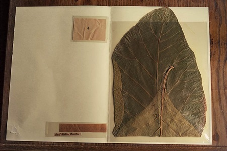 john muir botanical specimen, john muir national historic site, martinez, california by annie leibovitz