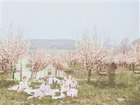 walter at the cherry blossom picnic by aislinn leggett