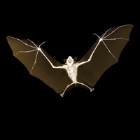 bat by nick veasey