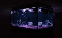 aquarium project (3) by pierre huyghe