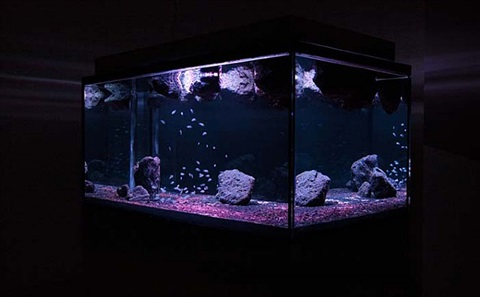 aquarium project (3) by pierre huyghe