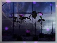 eversion (violet) by anri sala