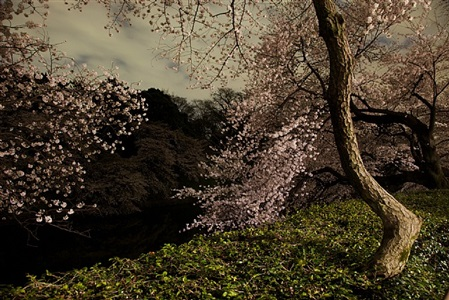 chasing good fortune: tokyo imperial memories, after dark by ori gersht