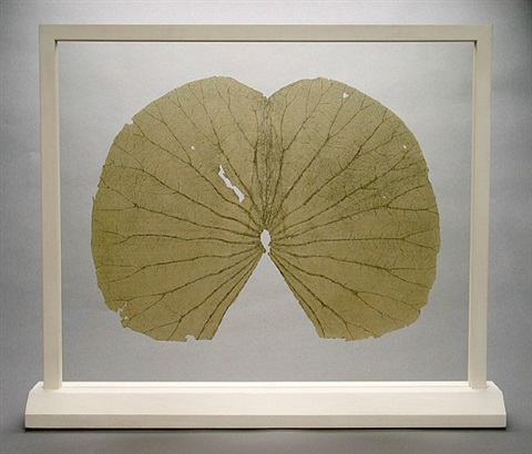 lotus leaves (the full leaves) by gabriel orozco