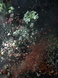 time after time: untitled 17 by ori gersht