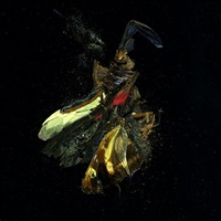 insecticide 18 by mat collishaw