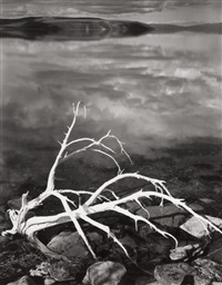 white branches, mono lake, pl.1 (from portfolio vii) by ansel adams