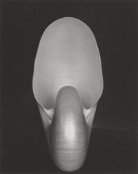 shell #15 by edward weston