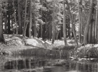 lodgepole pines, lyell fork of the merced river, yosemite national park, by ansel adams