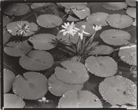lotus pads (from route i) by berenice abbott