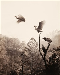 birds in flight by don hong-oai