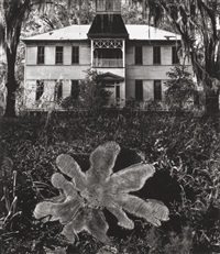 house with plant by jerry uelsmann