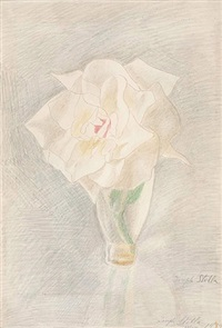 the white rose by joseph stella