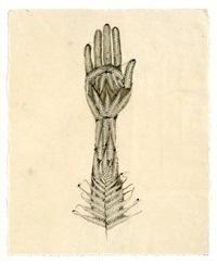 z traces 19 by valerie hammond
