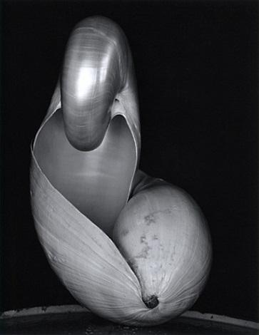 two shells by edward weston